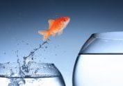 goldfish jumping into a tank bigger